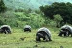 """Lạc vào xứ sở của những """"cụ rùa"""" khổng lồ"""