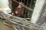 Trung Quốc: Con trai và con dâu nhốt mẹ già trong chuồng sắt bẩn thỉu suốt nhiều năm gây phẫn nộ