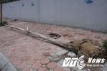 Cây chết khô, bật gốc đổ ngổn ngang trên phố Thủ đô