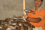 Bí quyết nuôi rắn độc đáo 'hái ra tiền' từ Nam chí Bắc