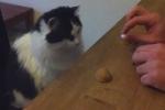 Chú mèo biết đánh bạc