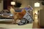 Chú chó giở 'độc chiêu' để được chủ dắt đi dạo