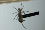 Clip: Kinh ngạc nhện khổng lồ ngoạm kéo chuột trên tường hút triệu lượt xem