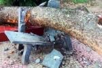 Bị cành cây rơi trúng đầu, nữ hiệu phó thiệt mạng tại sân trường