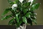 Những loại cây nên trồng trong nhà ngày hè oi bức