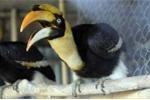 Tận thấy đàn chim Lạc Hồng tuyệt đẹp giá hàng trăm triệu