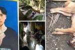 Vợ nghi can thảm sát 4 người ở Lào Cai cung cấp thêm thông tin quan trọng