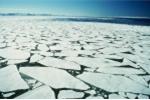 Tin chấn động: Khối băng rộng 6.600 km², lớn nhất lịch sử sắp tách khỏi Nam Cực
