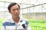 Thành tỷ phú nhờ trồng rau thủy canh