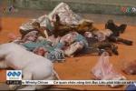 Bắt quả tang cơ sở dùng lợn chết bệnh đang phân hủy giả lợn Mán ở Tam Đảo
