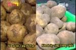Phân biệt khoai tây Đà Lạt và Trung Quốc