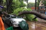 Hà Nội có 6 người thương vong do bão số 1