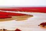 Bàn Cẩm Hồng, bến cảng mỗi năm đỏ như máu một lần