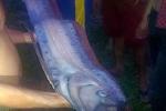 Cá hố khổng lồ dạt vào bờ biển Phan Thiết
