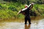 Chàng trai dân tộc bắt được cặp cá tầm nặng 40 kg