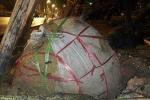 Cuồng phong ở Hà Nội: Cây bật gốc, lộ cách trồng rất lạ