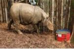 Phát hiện loài vật ngỡ đã tuyệt chủng ở Indonesia