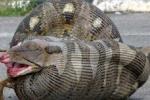 Phát hiện 'quái thú' khổng lồ nặng 100 kg, đẻ hàng trăm quả trứng