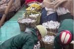 Khởi tố vụ án 'tung tin không đúng sự thật về cá chết ở biển Thái Bình'