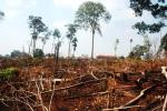 Bắt giám đốc và phó giám đốc để mất hàng ngàn héc ta rừng tự nhiên