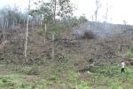 Video: Cận cảnh hàng nghìn ha rừng tự nhiên tại Bắc Giang bị tàn phá