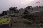 Rau trồng trên nghĩa địa đội lốt rau sạch ở chợ Hà Nội