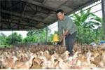 Cho nhập khẩu gà Trung Quốc: Cách để 'giết' người chăn nuôi