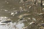 Nguyên nhân cá chết trắng trên hồ ở Thanh Hoá