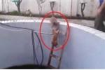 Clip: Mèo láu cá chơi khăm đồng loại và cái kết đau khổ