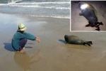 Hải cẩu lên bờ nô đùa với dân bị đánh chết: Cư dân mạng phẫn nộ, đòi truy tìm kẻ thủ ác
