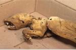 Phát hiện hài cốt rùng rợn của quái vật được cho là quỷ hút máu ở rừng Ukraina