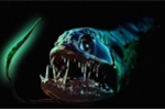 Cận cảnh những loài thủy quái ghê rợn nhất đại dương