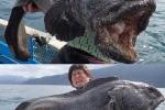 Những loài quái vật biển sâu kỳ dị nhất hành tinh