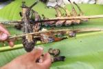Hành trình săn lùng loài 'cá sâm' kỳ lạ ở lưng chừng trời Hoàng Liên Sơn