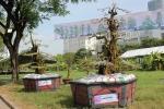 Cặp khế kiểng giá 12 tỷ tại chợ hoa Sài Gòn