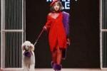 Chi Pu thong dong dắt cún cưng sải bước trên sàn catwalk