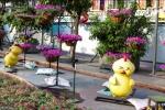 Biểu cảm hờn dỗi của chú gà ở đường hoa Nguyễn Huệ gây tranh cãi