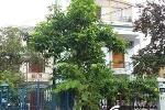 'Hô biến' đất công thành của riêng ở Hải Phòng: Đánh bùn sang ao!