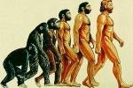 Vì sao loài người rụng đuôi tới 2 lần khi tiến hóa?