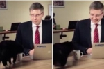 Chú mèo hồn nhiên phá đám buổi trò chuyện trực tuyến của thị trưởng
