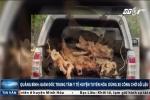 Quảng Bình: 'Quan' huyện dùng xe công chở gỗ lậu