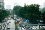 Ảnh: Hàng cây cổ thụ trên đường Kim Mã trước ngày bị dịch chuyển