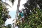Trèo cây hái dừa, nam thanh niên bị thòng lọng thắt cổ suýt chết