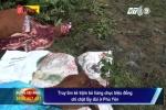 Truy tìm kẻ trộm bò chỉ chặt lấy đùi ở Phú Yên