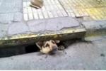 Video: Giải cứu chú chó mắc kẹt dưới cống 4 ngày