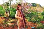 Bị cư dân mạng lên án, nữ du khách bẻ hoa anh đào ở Đà Lạt lên tiếng