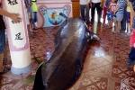 Dân Phú Yên an táng cá voi nặng hơn 1 tấn đúng ngày Tết Đoan ngọ