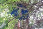 Biển báo giao thông núp bóng cây, tài xế dở khóc dở cười