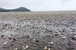 Cá chết hàng loạt ven biển Kiên Giang: Phát hiện chất tẩy rửa trong nước