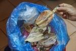 Cứu sống 3 người ngộ độc do ăn cá nóc
